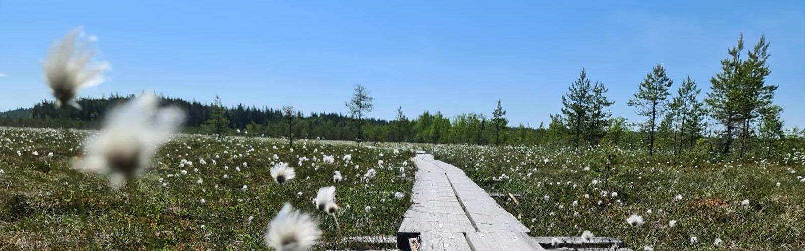 Päiväretki kahden kansallispuiston maisemiiin
